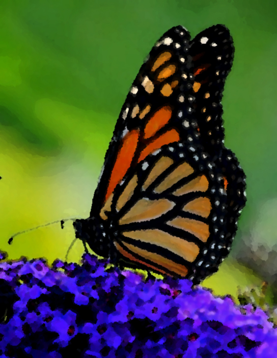 This image has an empty alt attribute; its file name is monarch2a.jpg